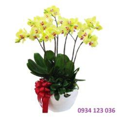 Hoa ngày tết