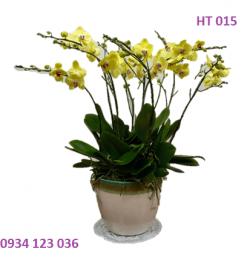 hoa-ngay-tet-6