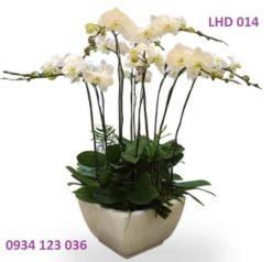 hoa-lan-ho-diep-13