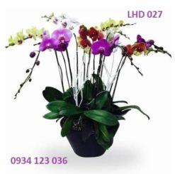 hoa-lan-ho-diep-26