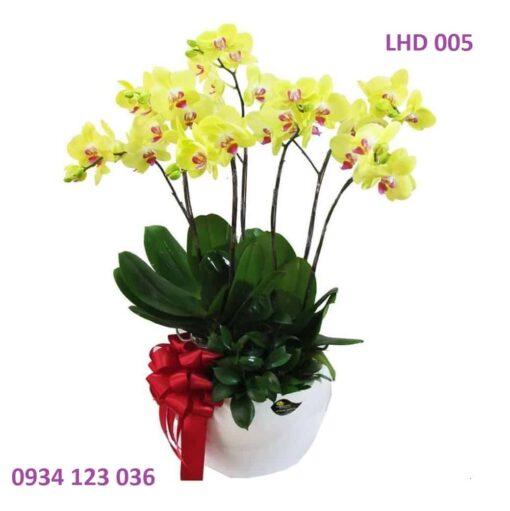 hoa-lan-ho-diep-4