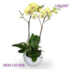 hoa-lan-ho-diep-6