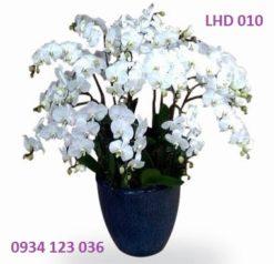 hoa-lan-ho-diep-9