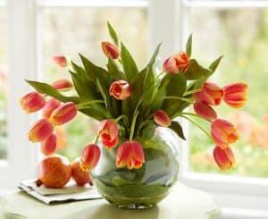 hoa-tulip (1)