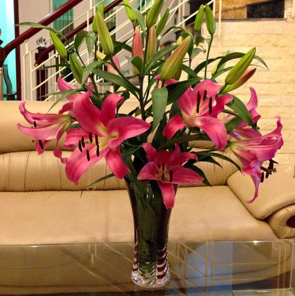 binh-hoa-lily