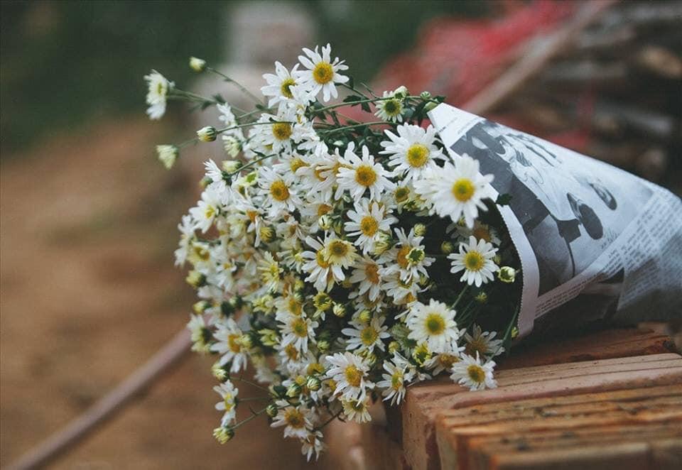 bó hoa cúc họa mi