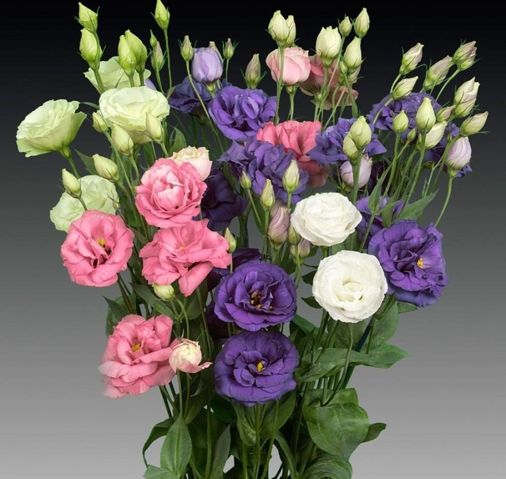 bình hoa cát tường từ hoa tươi nội thành