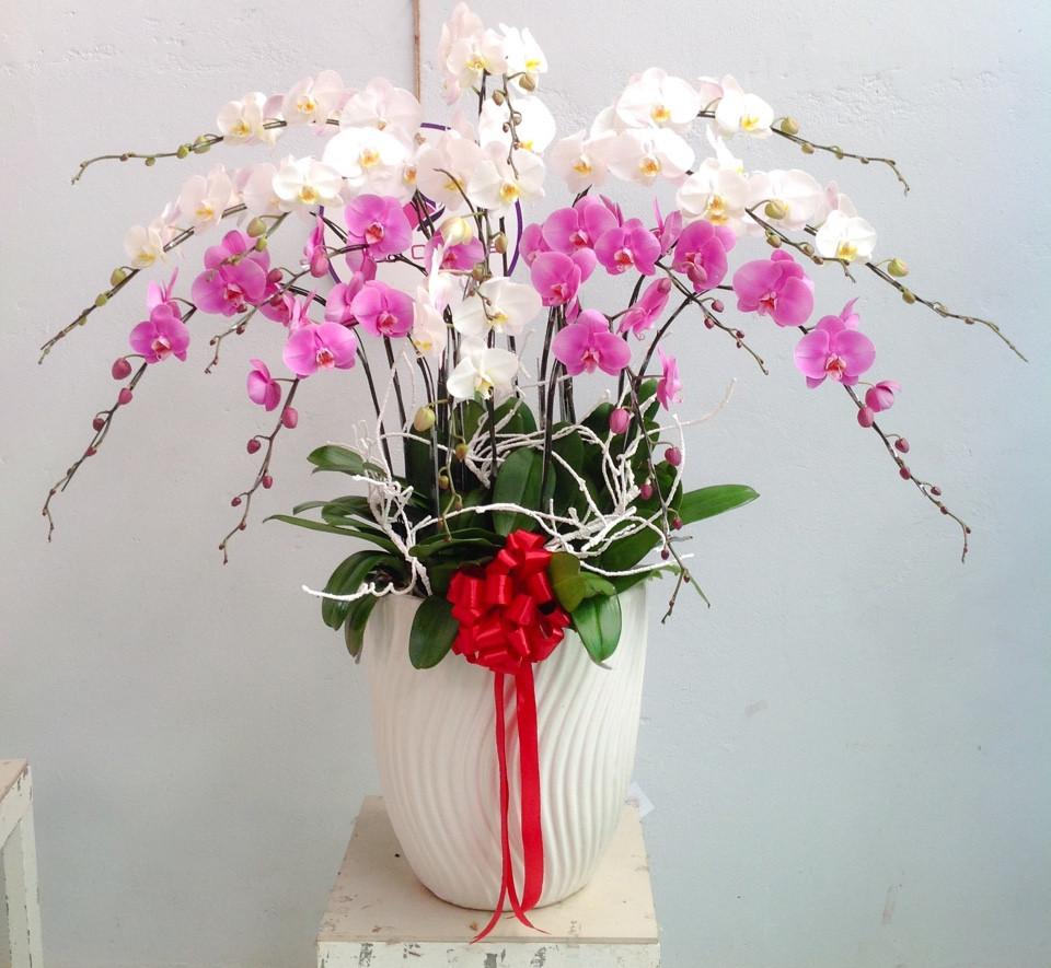 chậu lan là lựa chọn hoa tươi tiệc cuối năm không thể bỏ qua